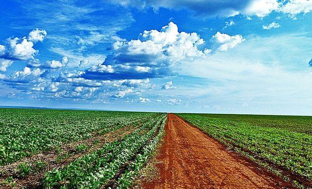 Pérdidas para la soja por clima en EE.UU.