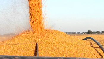 El mercado de granos local no contó con la referencia externa: así fue la semana en Chicago y Rosario