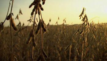 Nuevas subas para la soja disponible: pagaron más de $19.400 la tonelada en Rosario
