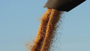 Por mayor stock de granos caen precios de la soja y el maíz