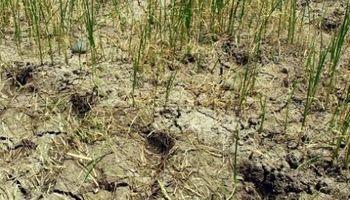Tres millones de has. en China muy contaminadas para sembrar