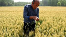 Un documento interno confirma que China apuesta a aumentar rendimientos de los cultivos en el período 2021-2025