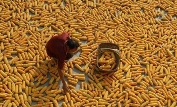 China tiene un gran stock del cereal.