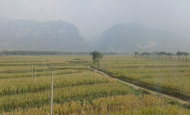 China tiene 36 millones de hectáreas sembradas con maíz.