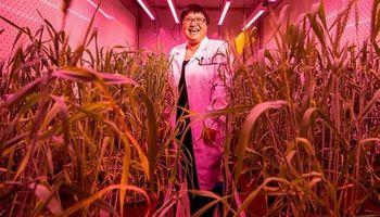 China asegura que este año tendrá listo el mayor banco de semillas del mundo