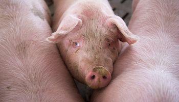 En noviembre, China compró 9,59 millones de toneladas de soja y 750 mil toneladas de carne