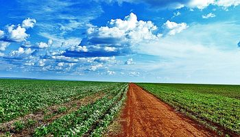 CBOT: soja mixta tras cinco jornadas consecutivas de subas