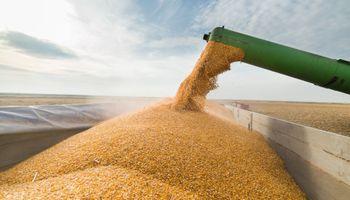 Cierre de las exportaciones de maíz: cómo impacta sobre la sustentabilidad de los planteos
