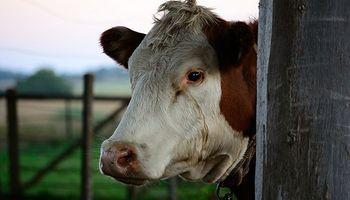 Cerraron 30 mil establecimientos ganaderos