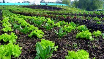 Proponen duplicar el área destinada a la producción agroecológica