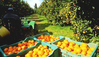 Ingreso de limones a Estados Unidos puede ser la puerta de entrada de otros cítricos