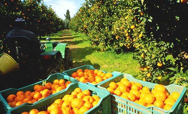 """""""Aspiramos que detrás de los limones entre la producción de naranjas y mandarinas"""", señaló el presidente de la Federación Argentina del Citrus."""