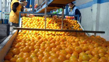 Por la falta de competitividad, caen exportaciones de cítricos