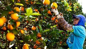 Se prorrogó por un año la emergencia del sector citrícola