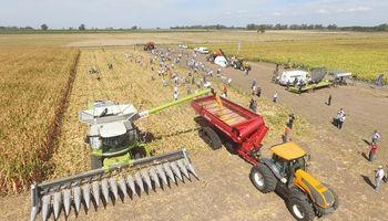 Las múltiples dimensiones del maíz se vuelven protagonistas de una Experiencia