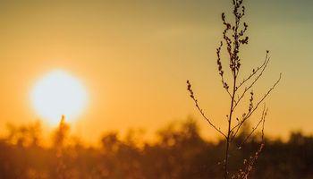 Alerta violeta en la región centro por ola de calor: recomendaciones
