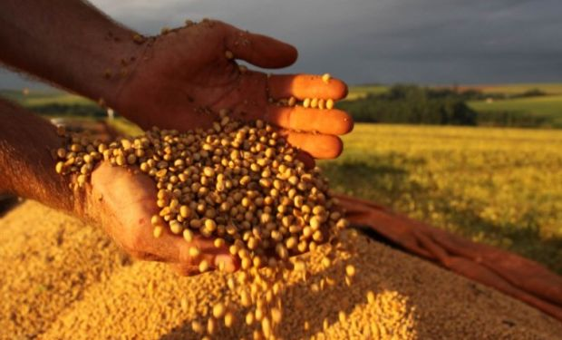 En el mercado local, para los valores contractuales, observamos una baja en la soja mientras que los cereales finalizaron el día a la par.