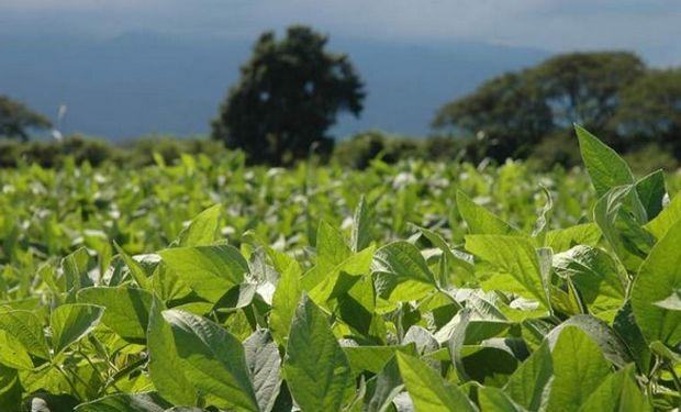 Todo indica que de continuar bajo escenarios climáticos regulares, la afluencia mundial de suministros de soja sería vasta y bordearía una vez más los niveles récord.