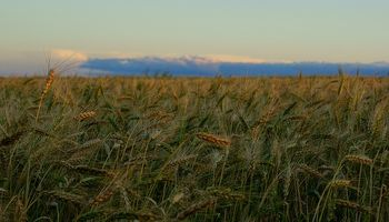 Clima seco golpea al trigo en Australia