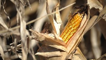 Las últimas novedades para cubrir el riesgo agropecuario, en una campaña gruesa marcada por el clima y la tecnología
