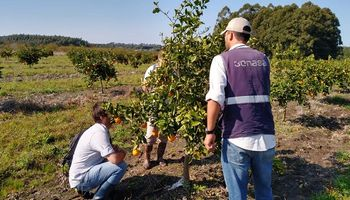Monitoreo intensivo en prevención del HLB en Corrientes