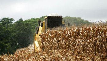 Estiman mayor producción de maíz en Brasil