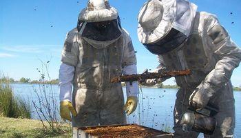 Con más de 6700 colmenas certificadas, Santa Fe es la segunda provincia productora de miel orgánica de Argentina