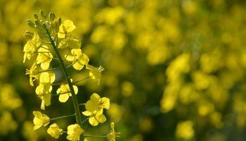 """""""Los productores pueden tener en sus manos un cultivo de muchísimo valor"""""""