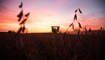Fuertes bajas para la soja en medio de un desplome histórico del petróleo