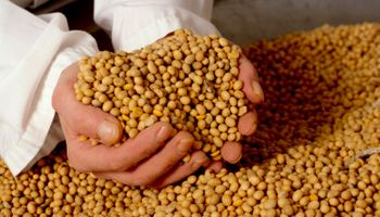 Nuevo acuerdo promueve el comercio legal de semillas