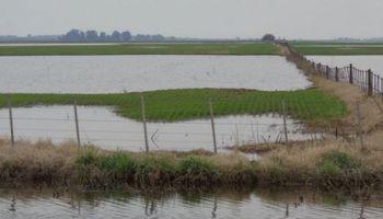 Trigo: complicaciones varias tras las fuertes lluvias