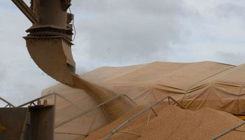 Proyectan una mayor demanda china de soja