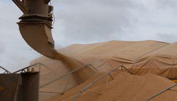 Compras de granos cayeron un 11% en el año