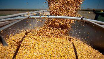 Siguen firmes las compras de maíz 2013/2014