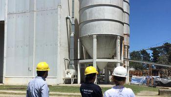 La compra de trigo del sector molinero es la segunda más baja en 20 años