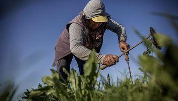 Conquista boliviana: producción de frutas y verduras, en sus manos