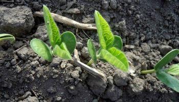Muy buen estado general para los cultivos en Estados Unidos