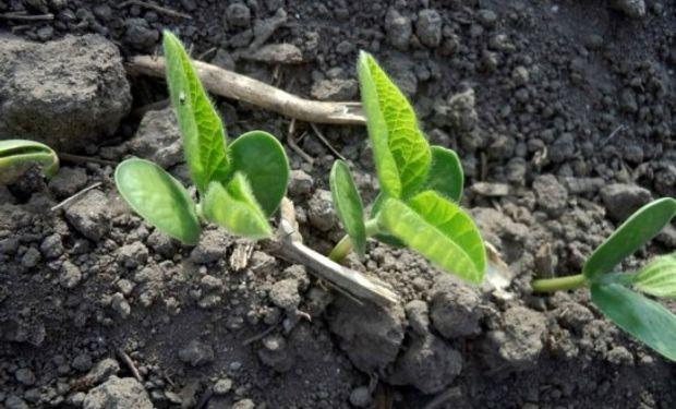 El USDA ponderó el 75% del maíz y el 72% de la soja en estado bueno/excelente.