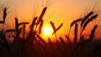 Fuertes subas para el trigo en CBOT por sequía en Estados Unidos