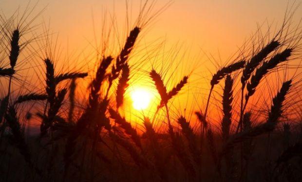 El trigo finaliza con subas de US$/tt 8,7 por fuerte sequía en el norte de Estados Unidos.
