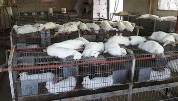 Córdoba: murieron 400 conejos y 2000 pollos por el calor extremo