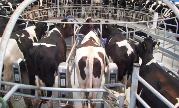 Santa Fe es la única provincia del país que define una leche estándar.
