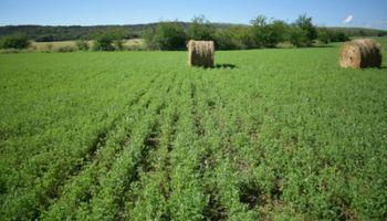 Córdoba será sede del Congreso mundial de alfalfa