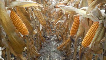 Agenda del Congreso Maizar 2020: la cadena agroindustrial se reúne hoy en un evento 100 % virtual