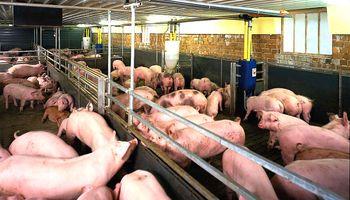 Crece con fuerza el consumo de carne porcina