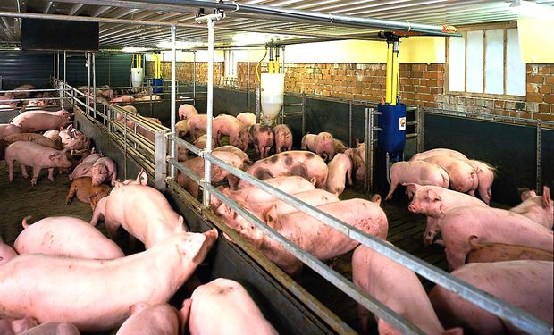 El consumo interno de cerdo casi se duplicó en los últimos diez años: de 5,8 kg por habitante en 2004 a 10,7 kg/habitante en 2014.