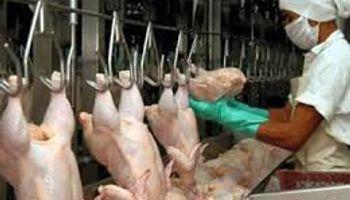 El consumo de pollos continúa creciendo