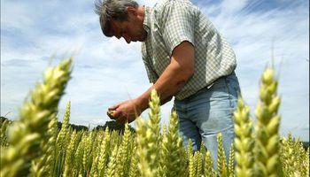 El contrato de trabajo agrario y la transferencia del establecimiento