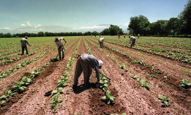 El contrato de trabajo agrario se entenderá celebrado con carácter permanente y como de prestación continua.