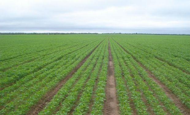Una mano de la biotecnología para la sustentabilidad agrícola